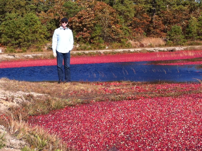 My hubby in the cranberry bog on a beautiful fall day!