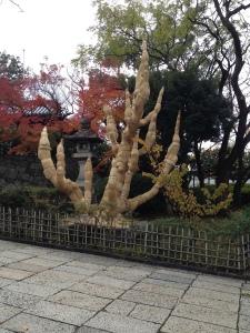 treecoat