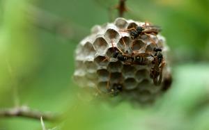 wasps