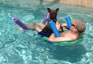 Dasher finds a lap in the pool. Naturally.